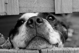 Great Homemade Remedies for Your Dog | Natural Pet Care | Scoop.it