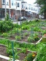 City Bountiful: The Rise of UrbanAgriculture | Économie circulaire locale et résiliente pour nourrir la ville | Scoop.it