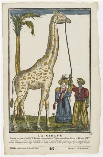 La Girafe et le pacha dans GIRAFE