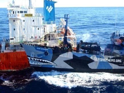 Accord entre les baleiniers japonais et l'ONG Sea Shepherd - Magazine GoodPlanet Info | Biodiversité | Scoop.it