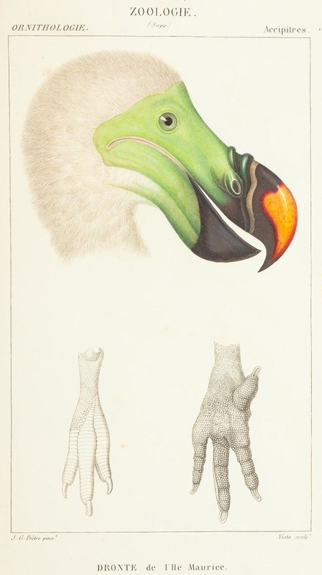 Science or Art? Beautiful Illustrations of Animals From 170 Years Ago | Machinimania | Scoop.it