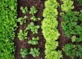 5 Steps to Successful Seed Saving - Earth911.com   Graines de Troc - Seeds swaping   Scoop.it
