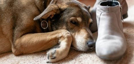 Vous dormez avec votre chien ? Continuez. | DORMIR…le journal de l'insomnie | Scoop.it