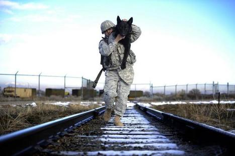 Canine Members of the Armed Forces Act | Animal Welfare Institute | Animals R Us | Scoop.it