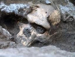 Sur les origines de l'homo sapiens - Le Club de Mediapart   Evolution de l'Homme   Scoop.it