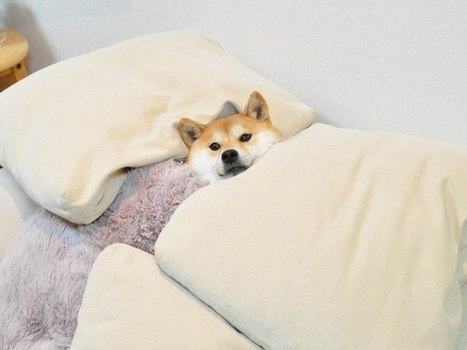 Dogecoin Shibe's Morning After | Dogecoin Delirium | Scoop.it