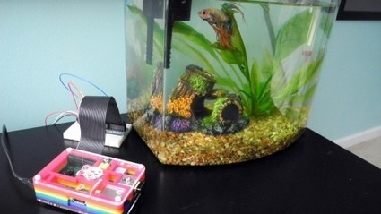 Fish tank temperature probe: an ideal beginner's project | Raspberry Pi | Scoop.it
