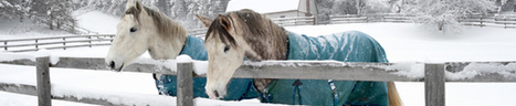 Buy Equine Clearance Products from Ride4less | Shopping | Scoop.it