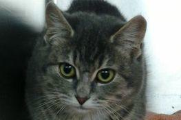 Journée d'adoption le samedi 23 novembre - Messager LaSalle   FIV&PMA   Scoop.it