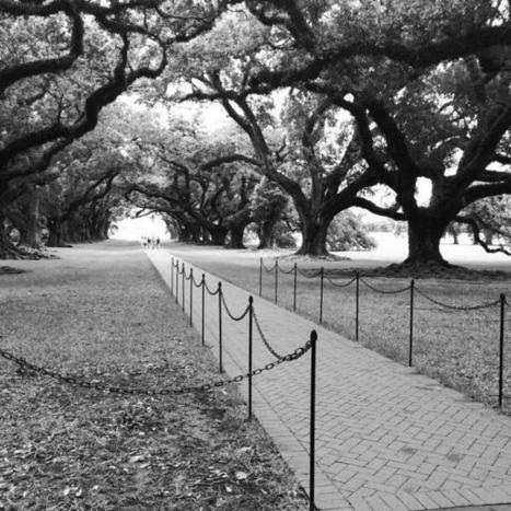 Tweet from @Sherry_0420 | Oak Alley Plantation: Things to see! | Scoop.it