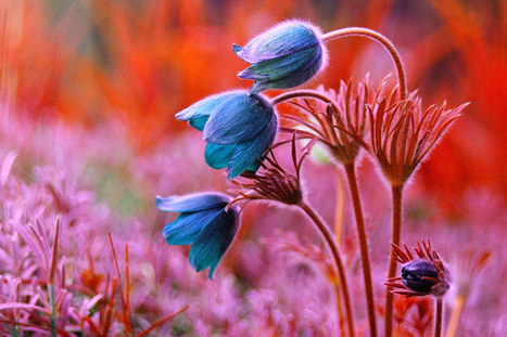 50 Breathtaking Examples of Flower Photography | Everything Photographic | Scoop.it