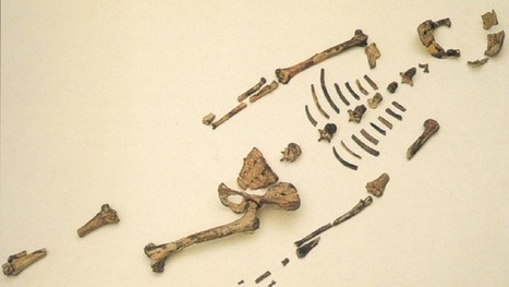Who is Lucy the Australopithecus? Google Doodle celebrates early human ancestor   Aux origines   Scoop.it