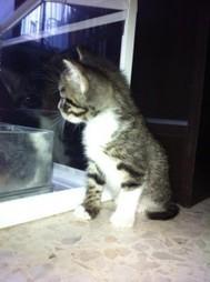 Recette pour parfumer et désinfecter une litière pour chat | Conseils bien être et huiles essentielles | Scoop.it