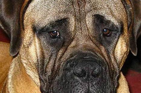 Ansiedad por separación en perros… o por soledad » » www.doogweb.es | Artículos Ana Barbé | Scoop.it