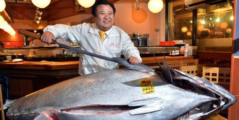 JAPON: Un thon rouge de 222 kilos vendu… 1,38 million d'euros | japon | Scoop.it