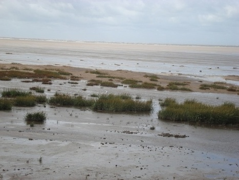 Beach grass: 'Let it grow' say conservationists   HoylakeJunction.com   COASTAL GEOGRAPHY   Scoop.it