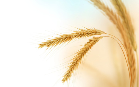 Celiac Disease & Gluten-Associated Conditions:  Using Laboratory Measures to Clarify Etiology and Determine Course of Treatment | The Whole Truth & Nothing but the Truth About Gluten-Free Diet | Scoop.it