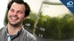 4 Ways Algae is Awesome   All about algae   Scoop.it