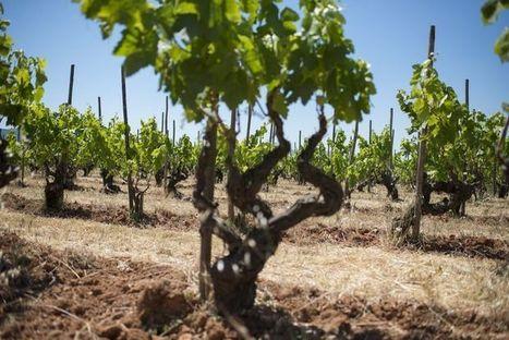 En Catalogne, le vin pétille aussi | Cavissima - Actualité vin | Scoop.it