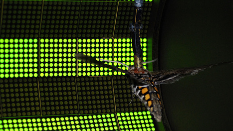 "Roboticists discover the secret of insect flight, and it's not wings | L'impresa ""mobile"" 