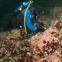 Ancient Arctic Algae Record Climate Change | Amocean OceanScoops | Scoop.it