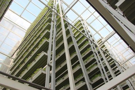 Fermes verticales : les laitues ? Au trentième étage vous ... - vertenville   culture hors-sol   Scoop.it