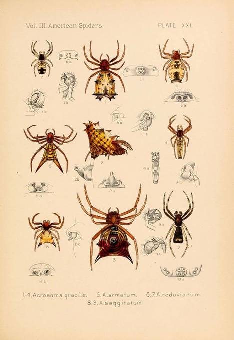 Biodiversity Heritage Library<br/><br/>: illustrations d'araign&eacute;es | Insect Archive | Scoop.it