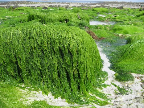 Algae Invasion | Quirky Travel and Weather | Scoop.it