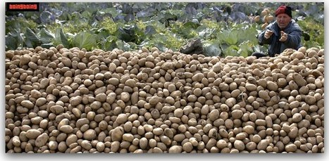 The case of the poison potato The Lenape potato,... | Natura educa | Scoop.it