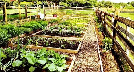 Politics Aside, Urban Farming Grows in DC | Searching for Safe Foods | Scoop.it