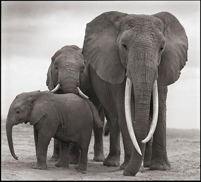 LEST WE FORGET: Africa's Ivory-Profit Driven Elephant Mass Slaughter Continues - A Family Falls | CLIMATE CHANGE WILL IMPACT US ALL | Scoop.it
