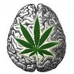 Le cannabis pète les câbles du cerveau | Autres Vérités | Scoop.it