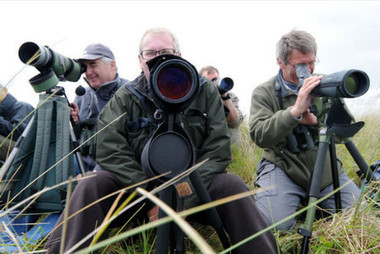 Lincolnshire hotspots could make top UK birdwatching guide - East Lindsey Target | What's Up With Birds | Scoop.it