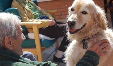 Micromecenazgo para llevar a cabo terapias con animales | Personas y Animales | Scoop.it