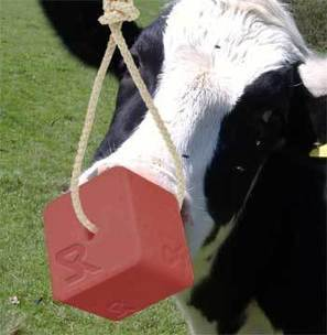 Mineral Salt Blocks Mineral Salt Lick Blocks Animal Licking Blocks Manufacturer | louiesmith | Scoop.it
