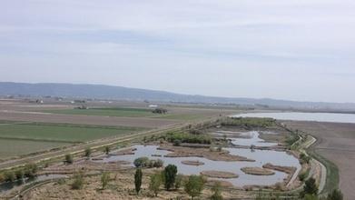 Not Much Refuge In Klamath Basin For Migratory Birds · EarthFix · Oregon Public Broadcasting | Sustain Our Earth | Scoop.it