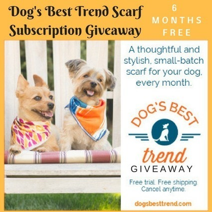 Dog's Best Trend Scarf Review [and GIVEAWAY] ends 11/30 | Animal Bliss | Animal Welfare | Scoop.it