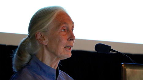 Jane Goodall: 'Human Population Growth' the Biggest Threat to Chimpanzees | Oceans and Wildlife | Scoop.it