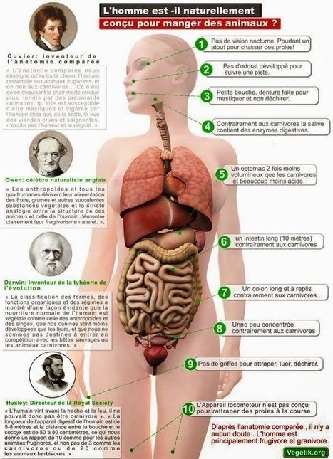 L'Homme est-il fait pour manger des animaux ? - L'Alimentation Santé | Santé Naturelle | Scoop.it