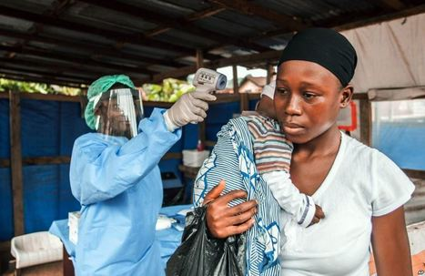 Ebola Virus Can Live in More Animals Than Once Thought | Manchester Met News | Scoop.it