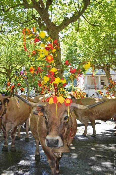 La Fête de l'Estive en Aveyron | L'info tourisme en Aveyron | Scoop.it