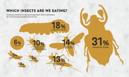 RESOURCE DEPLETION: Can Insects Feed a Hungry Planet?   > Environmental   Scoop.it