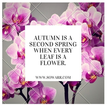 English Quotes about autumn | Free Arabic Quotes | Scoop.it