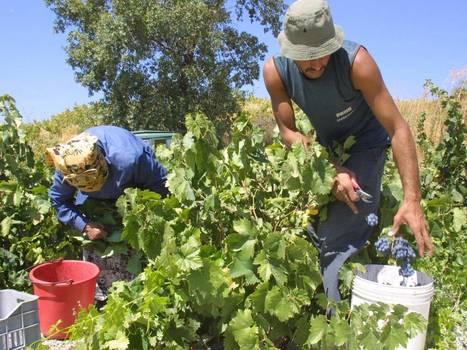 Wines in Cyprus: A taste of things to come   Wine Cyprus   Scoop.it