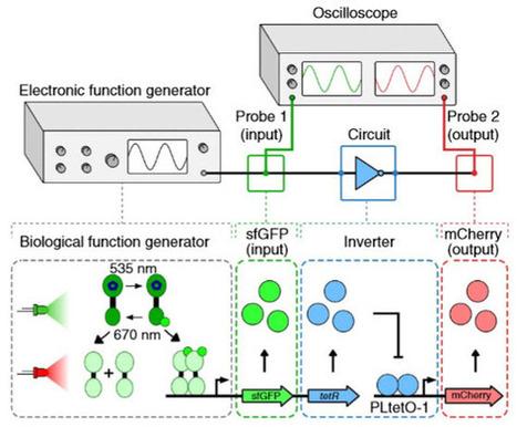 Rice bioengineers invent light tube array to debug genetic circuits | Microbiome | Scoop.it