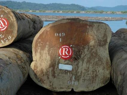 Rougier remporte une concession d'exploitation forestière portant sur 270 000 ha en Centrafrique | Sustainable Development | Scoop.it