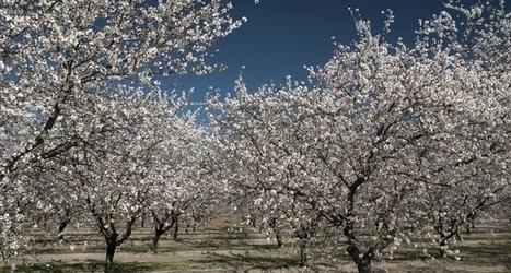 Les futures crises écologiques et alimentaires inquiètent les géants du négoce agricole | Questions de développement ... | Scoop.it