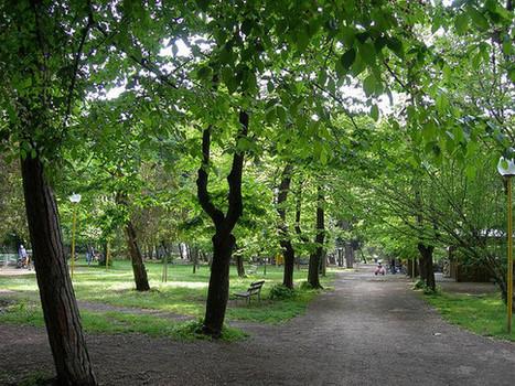 Il verde pubblico che frutterebbe una fortuna - L'Huffington Post | Gli alberi nei giardini | Scoop.it