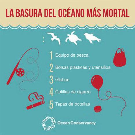 20 plásticos peligrosos que están matando animales marinos - ONG-Venezuela Verde | Agua | Scoop.it