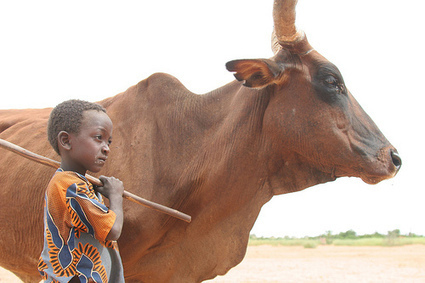 New FAO book spells out rationale, priorities for investing in livestock development to reduce poverty   Sustainable Livestock development   Scoop.it
